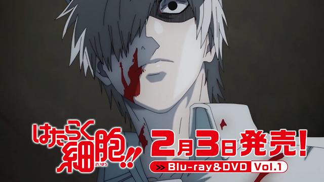 电视动画「工作细胞!!」第一卷BD CM公开